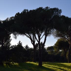 Ciudadanos registra una propuesta para proteger los espacios verdes en Las Rozas